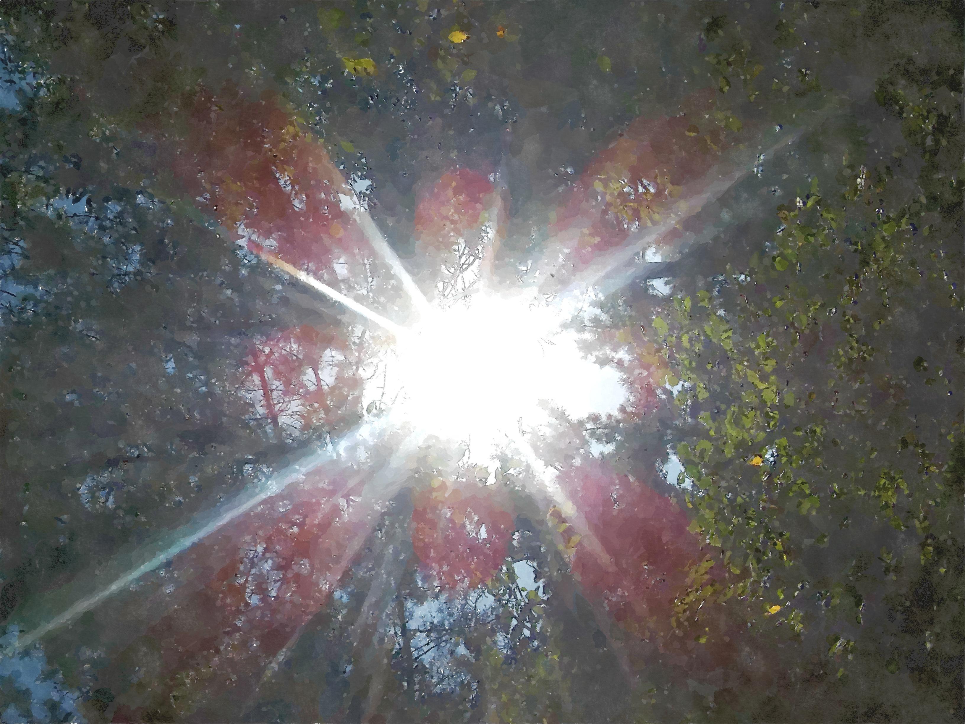 수풀 빛.jpg